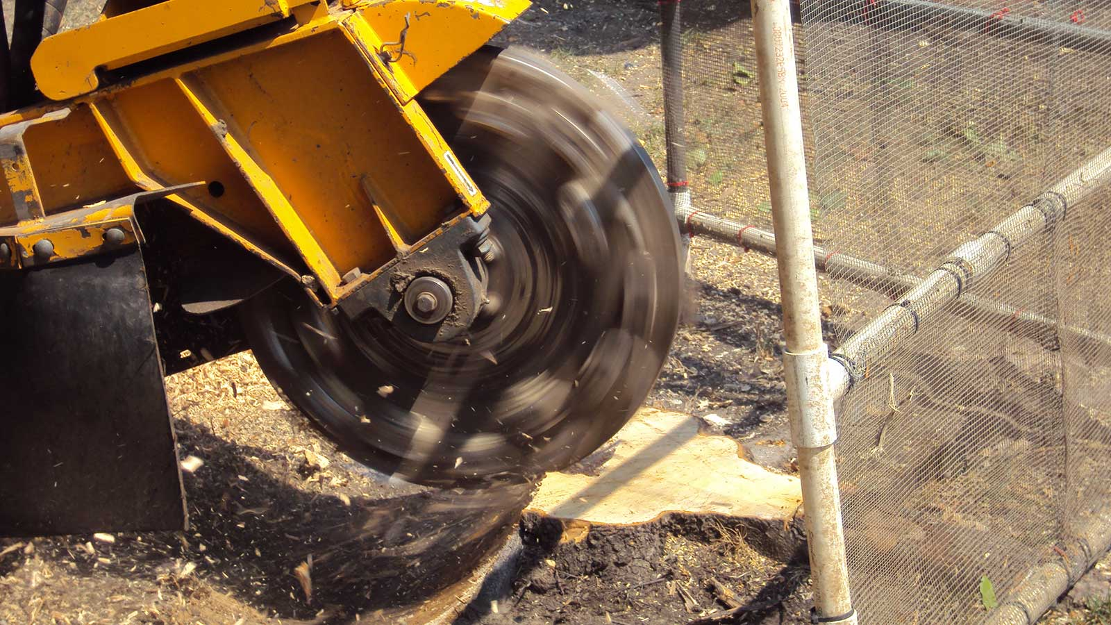 Arbor Masters can help grind stumps