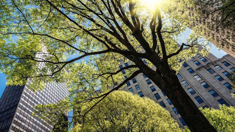 arb-urban-tree-care